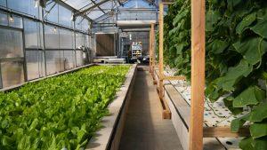 The Benefits Of Aquaponic Farming