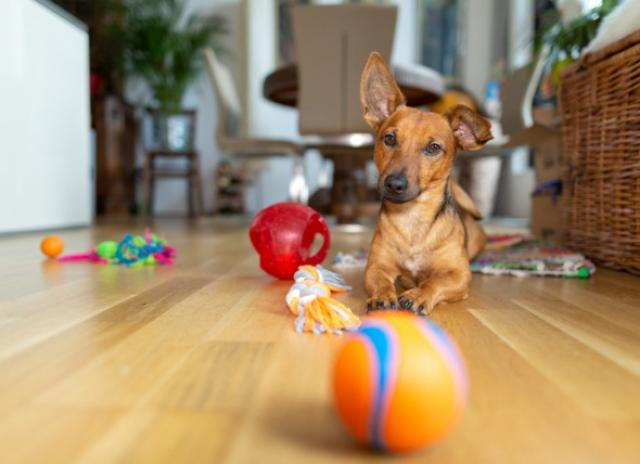 Your Pet With The Best Toys and Items